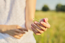 Close-up Of Green Mantis Insect In Girl's Hand