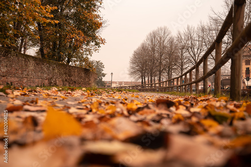 Photo Foglie cadute in autunno