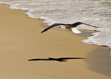 Seagull In Destin Florida Casting A Shadow On Beach