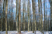 A Beutiful Shot Of Tree Stems In The Forest In Winter