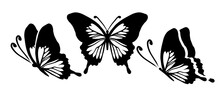 Graphic Flying Black And White Butterflies. Vector Illustration. Tropical Butterfly On A White Background