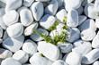 Weiße Kies Steine an der Küste