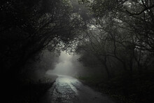 A Muddy Road Leading Through An Eery Forest