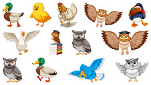 Set Of Different Birds Cartoon Style Isolated On White Background