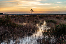 Predawn Sky Over Grassy Wetlands