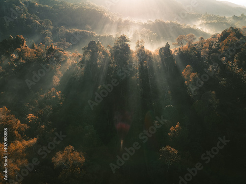 Obraz Foggy forest Morning light in the forest from above - fototapety do salonu