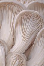 A Vertical Shot Of The Gills Of Edible Mushrooms
