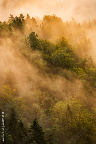 Aerial View of Forest with Fog Glowing in the Warm Light of the Rising Sun