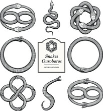 Snake And Ouroboros Illustrations In Vintage Style