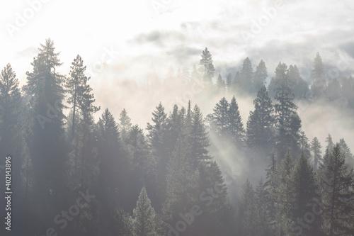 Obraz Fog in the forest - fototapety do salonu
