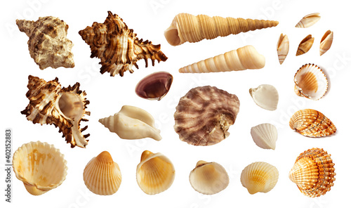 Fototapeta Multicolored Seashells Collection Isolated on White Background
