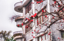 Red Flowering Cotton Trees In Guangzhou China
