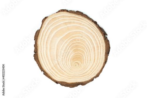 Fotomural sezione del tronco di un giovane albero