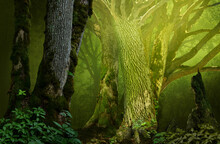 Mysterious Fantasy Forest With Old Mossy Trees And Branches Silhouettes