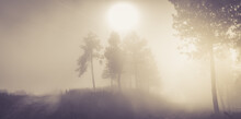 Morning Orange Landscape In The Mountains. Rays Of Light Through The Fog And The Trees