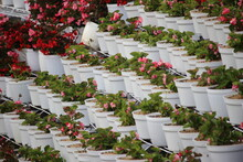 Small Flower Gardens In Terraced Pots At Tourist Attractions