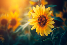 Field Of Blooming Sunflowers And Light Of Sun In The Morning.