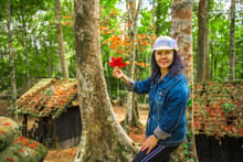Female Tourist With Red Maple Leaf In Hand In The Green Forest At Political And Military School At Phu Hin Rong Kla National Park, Spring Time, Phitsanulok Province,