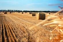 Round Bales Of Straw On The Field Against The Blue Sky.