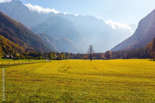 Fotografía Green grass pasture
