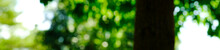 Panorama View Green Leaf In Sunny Blurred Background