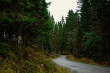 Scotland Woodland Road