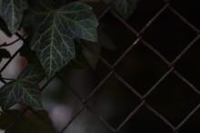 Leaves Behind A Metal Mesh