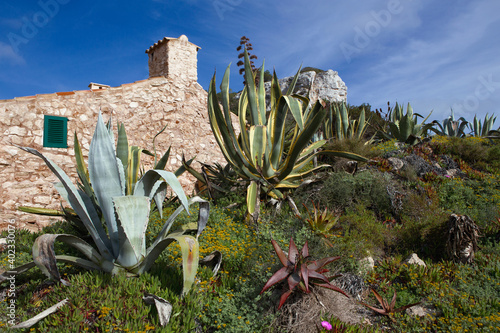 Fotografija Characteristic stone house surrounded by Agave,  typical plants of the Mediterranean coastal scrubland, Maiorca, Balearic island, Spain, Europe
