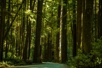 Forest view in Redwood National Park