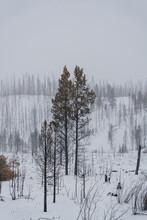 Recent Burn Area In Colorado