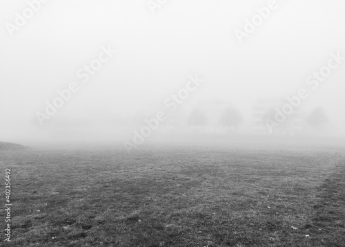 Obraz Autumn landscape. Foggy morning. Black and white. Mobile photography. - fototapety do salonu