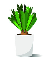 Home Plant In A Pot On A White Background. Cycas. Palm Tree Vector