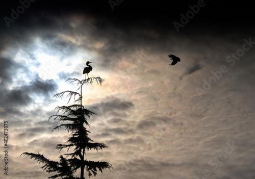 Photo Silhouette Heron and Crow