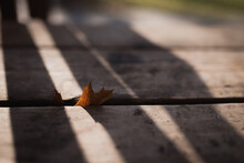 Brown Leaf Trapped In The Crack On A Wooden Porch