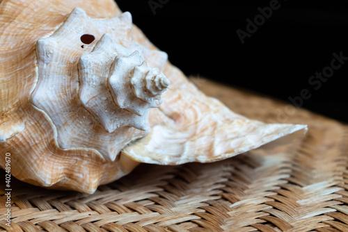 Fotografiet Large seashell conch on wicker table