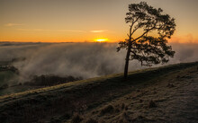 Beautiful View Of The Lone Scots Pine And The Winter Morning Sun Just Appearing Over The Mist Filled Pewsey Vale, Seen From Martinsell Hill, Wiltshire