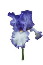 Iris Clear 2