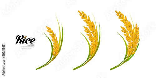 Fotografie, Obraz Premium Rice great quality design concept  vector.