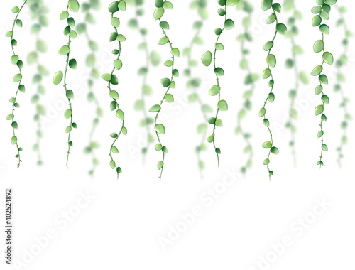 Papel de parede Decorative illustration graphic of creeper plants Dischidia nummularia on white background