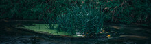 Long Exposure Close-up Of The Flowing Stream. Panoramic Shot. High Resolution Sharp Photo. Panorama Banner.