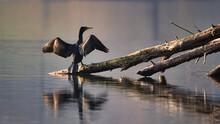Kormoran Trocknet Seine Flügel In Der Sonne Nach Der Fischjagd