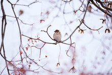 Beautiful Background With Small Sparrow Sitting On Tree Twig