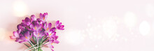 Creative Layout Pattern Made With Spring Crocus Flowers On Pink Background. Flat Lay, Banner Size. Spring Minimal Concept.
