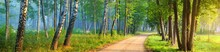 An Alley On A Single Lane Rural Road Through The Green Birch And Other Deciduous Trees. Idyllic Forest Landscape. Soft Sunlight. Recreation, Environmental Conservation, Ecology, Nature