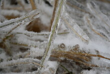 Ice Covered Grass