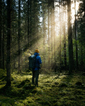 Thick Dark Forest With Moss And Sun Rays Shining Trough. Male Person Standing In Distance...V.By Valdis Skudre