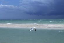 Seagull Flies Over The Beach Against The Blue Ocean