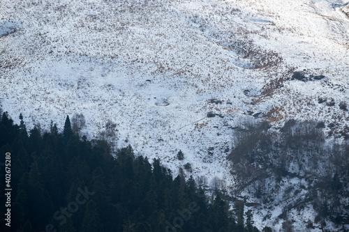 Fototapeta Caucasian Reserve of Russia in winter