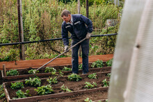 An Old Man Of European Appearance Loosens The Earth With A Rake In The Garden. Agriculture And Horticulture