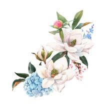 Beautiful Stock Illustration With Gentle Hand Drawn Watercolor Floral Composition. Magnolia And Hydrangea Flowers.